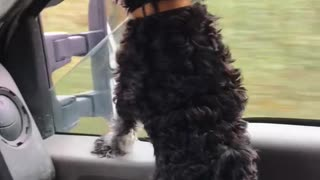 Dog and truck and window