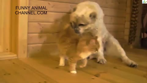 Try not to laugh[funny animal videos]