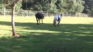 Horse gets Kicked for trying to mate