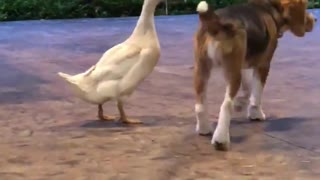 Dog And A Duck Prove That True Friendship Knows No Limits