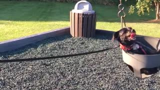 Dog enjoys swinging at the park. - Video