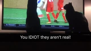 Woman yells at her black cat to stop touching the tv screen  - Video
