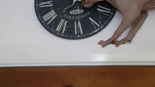 Cat Uses Clock as Chew Toy