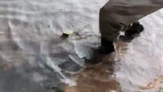 MasterFisher catches trout in wyoming
