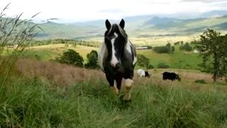 Watch this wonderful video of horses - Video