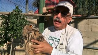 Pair of eagle owls released in West Bank