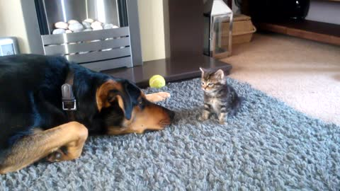 Dad Was Reluctant To Introduce New Kitten To Their Big Dog, But He Wasn't Prepared For This Reaction