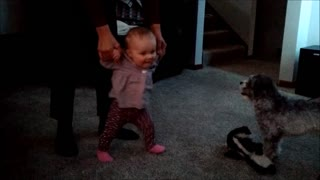 Precious baby is extremely excited to be walking