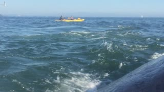 Close Whale Encounter in Santa Cruz - Video