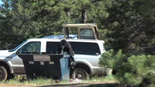 Spanks Black Bear For Getting Into Garbage