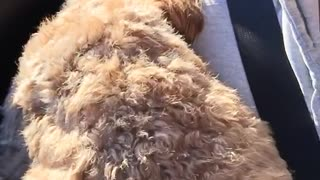 Dog does not like car rides  - Video
