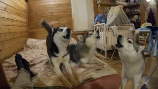 """Huskies hold special """"night concert"""" for the neighbors"""