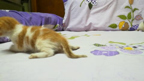 cute Baby 2 week Kitty play on bed