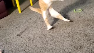 Cat Can't Stand His Cone Collar
