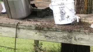 Honey bee clean up