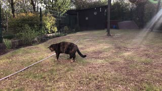 Cautious Kitty Doesn't Trust the Garden Hose