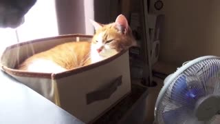 Polite Kitty Shows Respect To An Elderly Cat. This Is Stunning What She Does! - Video