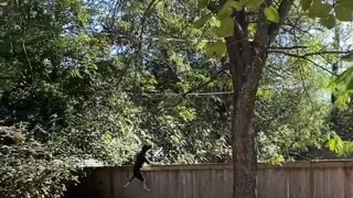 Parkour Dog Scales Fence over Squirrel