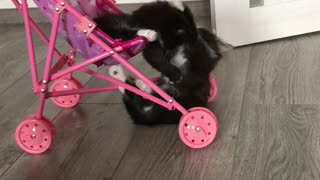 Whimsical Kittens Playing on a Stroller