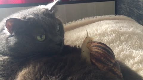 Patient cat lets snail friend crawl all over her