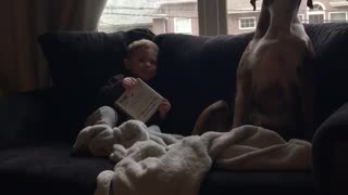 Boxer and Little Boy Have in Depth Conversation