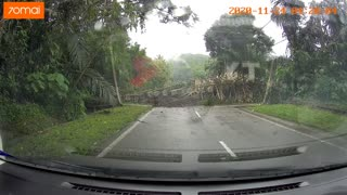 Car Near Miss Almost Hit By Tree Dashcam