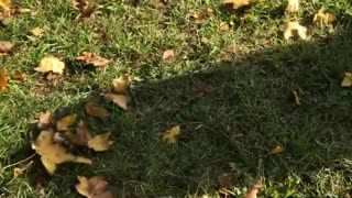 Funny Video of Dog Ignored His Friend - Video
