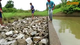 Terrifying! Three Sisters Catch Big Snake At Canal While Swimming - How To Catch Water Snake