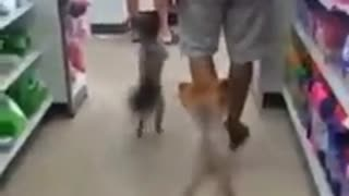 Two Dogs Shopping in Thailand