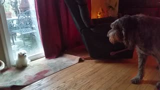 Determined puppy tries to wake up senior dog for playtime - Video