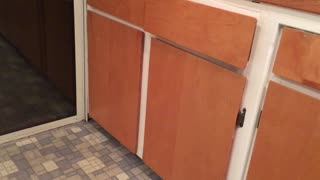 Cat traps self in cabinet  - Video