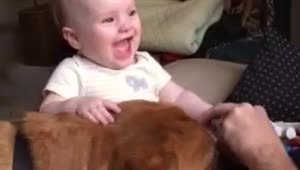 Dog makes baby laugh hysterically - Video