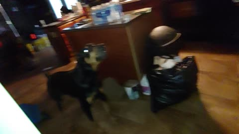 Doberman Pinscher fearlessly protects home from scary intruder