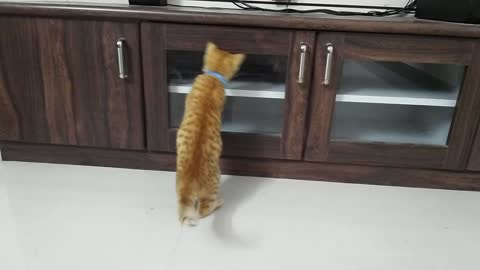 Cat Shocked When He See His Face First Time In Mirror