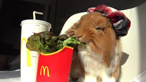 Pimousse enjoys his Happy meal