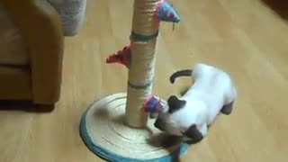 Little kitten and his favorite toy - Video