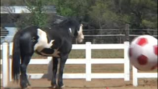 Let your horse have a ball and you will see what happens! - Video