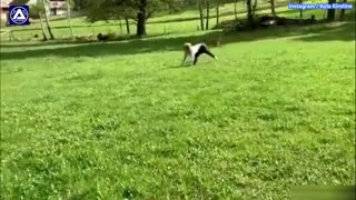 Woman runs and jumps like a horse