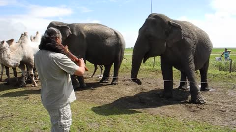 Elephant Puts Happy Feet Into Action, Dancing To The Magic Flute