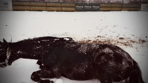 Happy horse has the best time playing in the snow