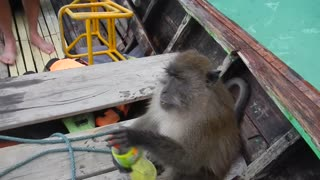 Drunk Thai Monkey - Video