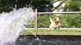 Small white dog outside pool gets splashed