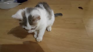 Good kitten, clever kitten  - Video