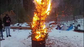 Burning the dead pine tree