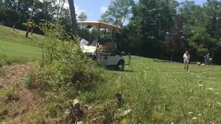 Rogue Golf Cart Goes Rolling