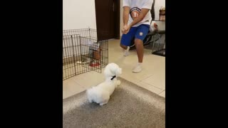 Shot my dog! funny video  - Video