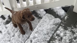 Labradoodle Puppy's First Snow Day