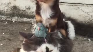 Dog Bird cat - Video