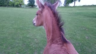 Foal loving his back scratches