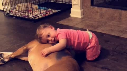 Baby girl preciously cuddles boxer best friend